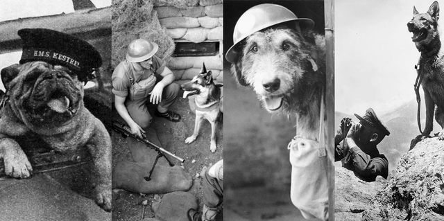 Free: Animal Hero's and Villains of the Great War
